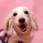 PETKISS すき間もみがける 波型フィンガー歯ブラシ(ライオン商事)