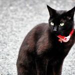 黒ネコのお散歩傘(IZAVELL)