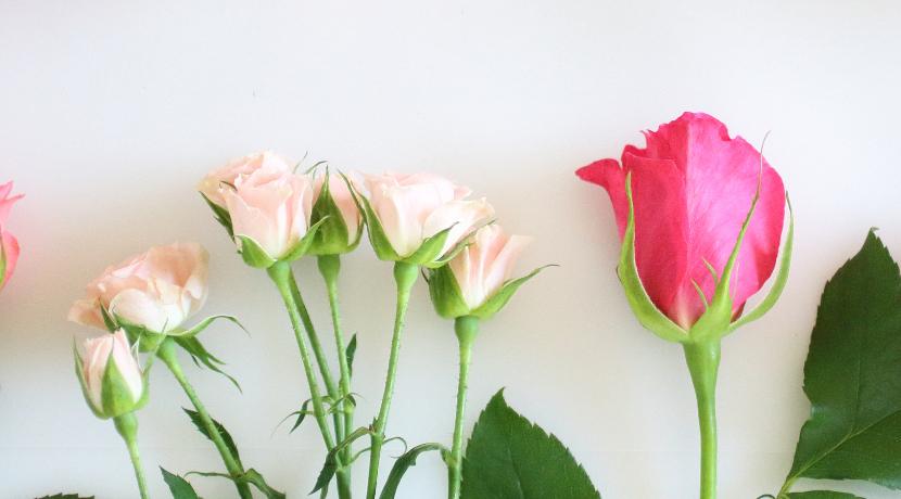 割れない花瓶 JUSTPOT(ホリシン)