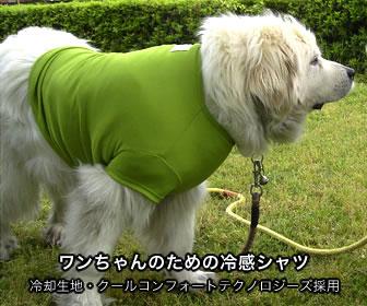CCT冷感タオルからワンちゃん用シャツも発売中。