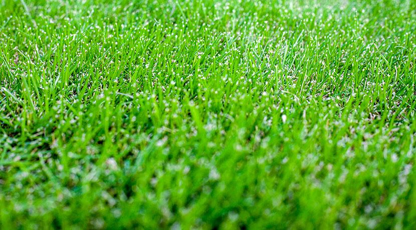 草むしり用電動ドライバーアタッチメント、芝生のお手入れ革命 抜けるンですBit(アイ・ティー・ケー)