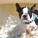 犬用プール ぺたバス(オーエフティー)