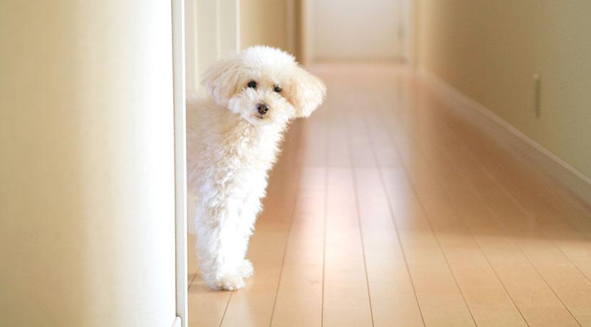 犬ちゃんのためのフローリング コーティング剤。