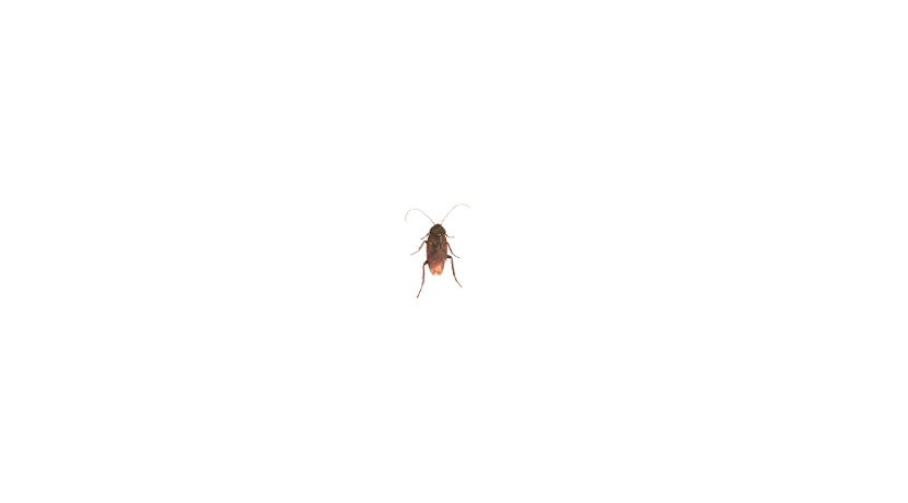 ゴキブリを確実に退治するためのアイテム。