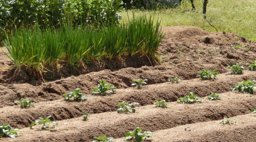 草むしりには爪つき手袋が便利!ザクザク掘れる穴掘りグローブ。