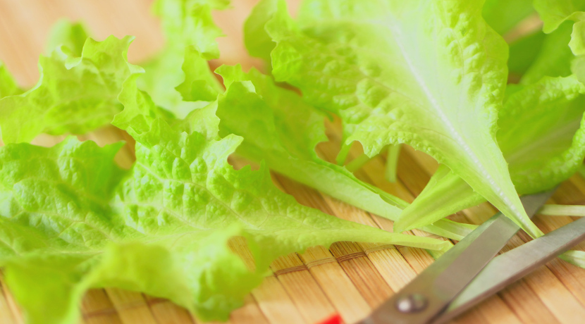 家庭で簡単に野菜が育てられる水耕栽培のキット、手間を掛けずに野菜作りが楽しめます。